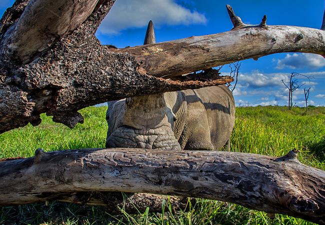 Thula Thula Rhino