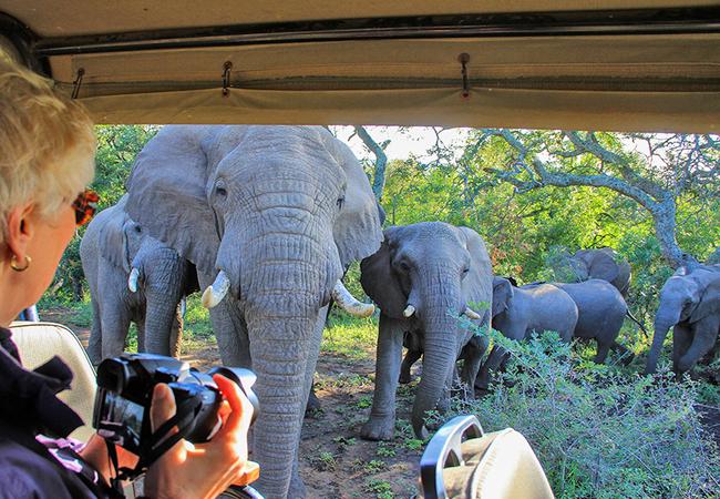 Thula Thula Elephant family