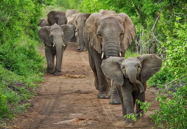 Thula Thula Elephants