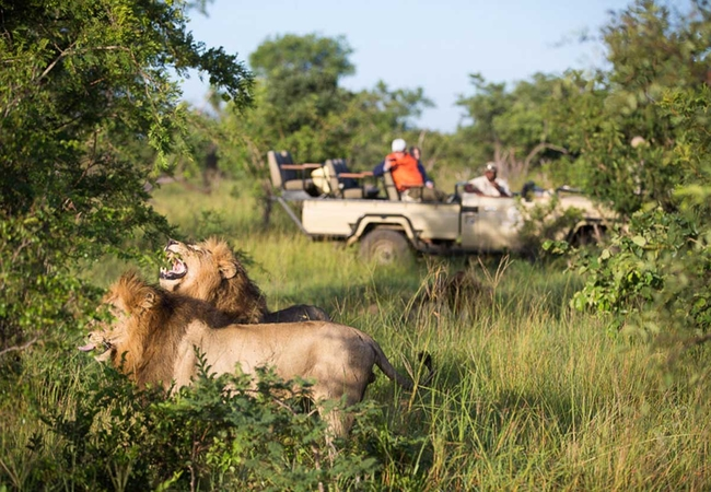 Game Drives in Greater Kruger