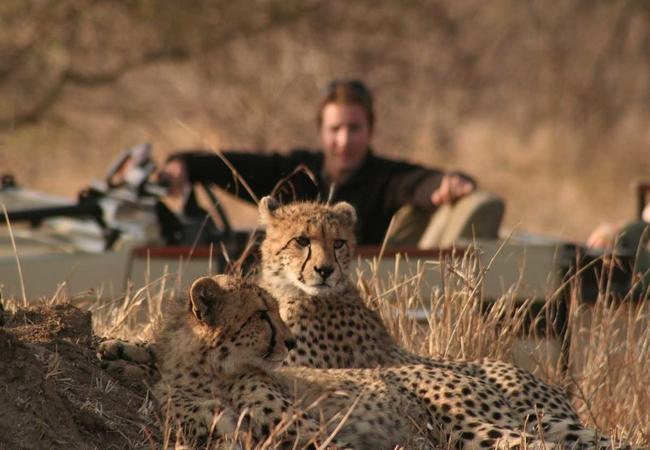 Personal Safari Encounters
