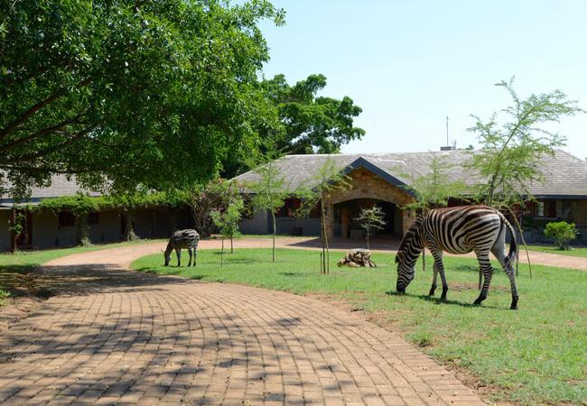 Zebra homestead