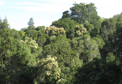 Indigenous forest