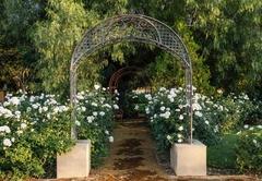 Tuscan Rose