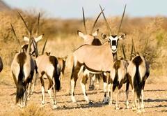 Tutwa Desert Lodge
