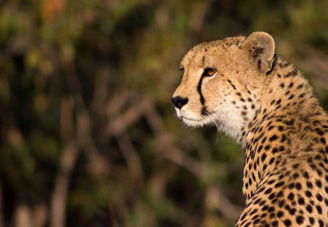 Ulusaba Game Reserve