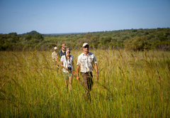 Safari walks