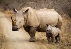 Hluhluwe Imfolozi Safaris