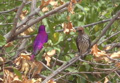 Birders paradise