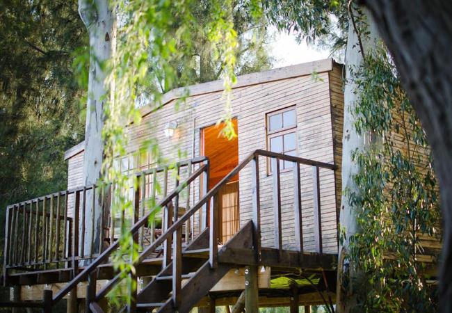 Luxury Tree Houses