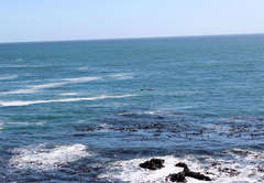 Whale Cove A104