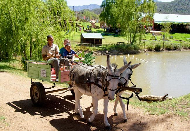 Wilgewandel Holiday Farm