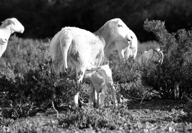 Wolvekraal Guest Farm