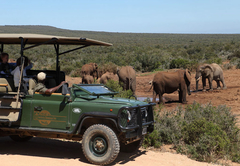 Game Viewing