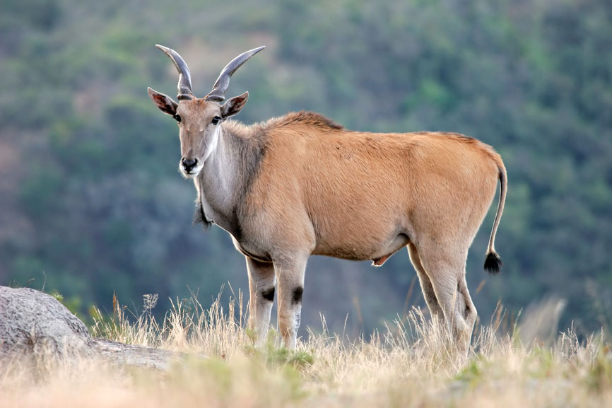 South Africa Wildlife and Wildlife Reserves