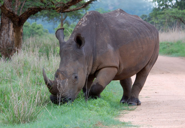 South Africa Wildlife South African Wildlife And
